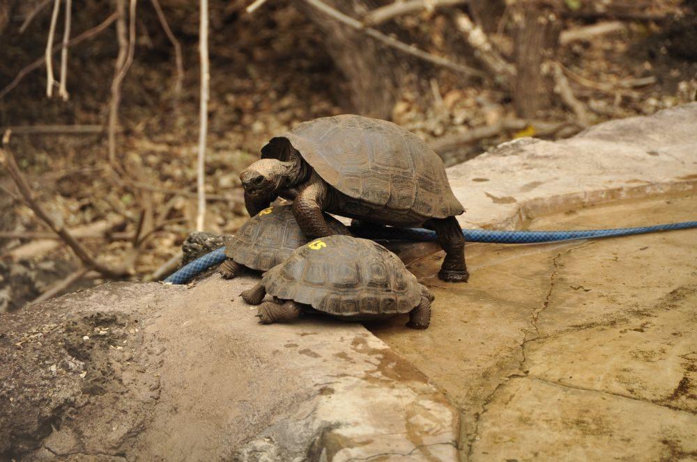 Schildkrötenbabies