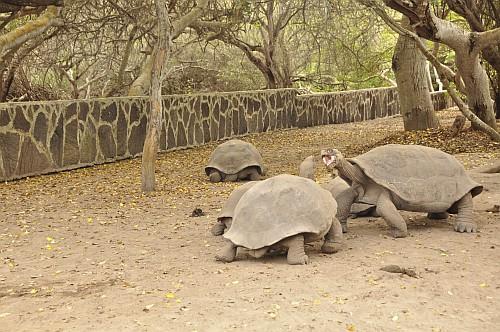 Zoff in der Galapaguera