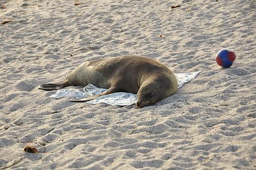 Das Handtuch ist jetzt meins