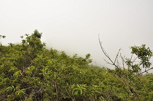 Sierra Negra Krater in den Wolken