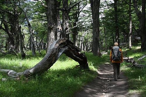 Im Lenga-Wald