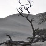Knorrige Wüstenbäume