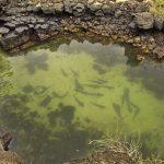 Grieta de las Tintoreras - Schlafplatz für Haie und Rochen