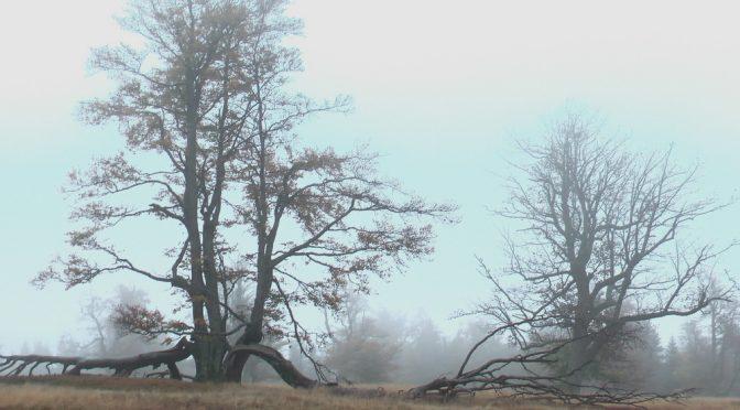 Schachten im Nebel