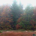 Schachten im Herbst