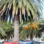 Santa Cruz Strandpromenade