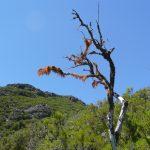Baum im Hochgebirge
