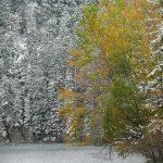 Herbstleuchten im Schnee