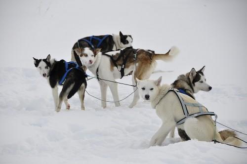 Sechs Hundestärken