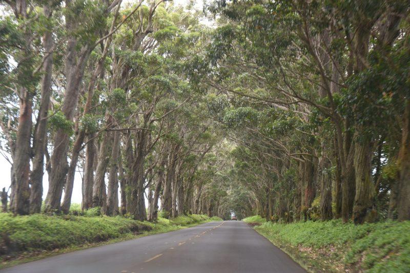 Tree Tunnel - Alleen kennt man hier sonst wohl nicht