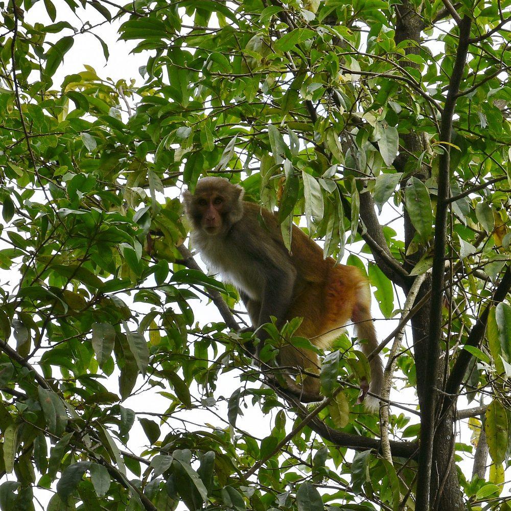 Endlich Affen, die sich fotografieren lassen ;)