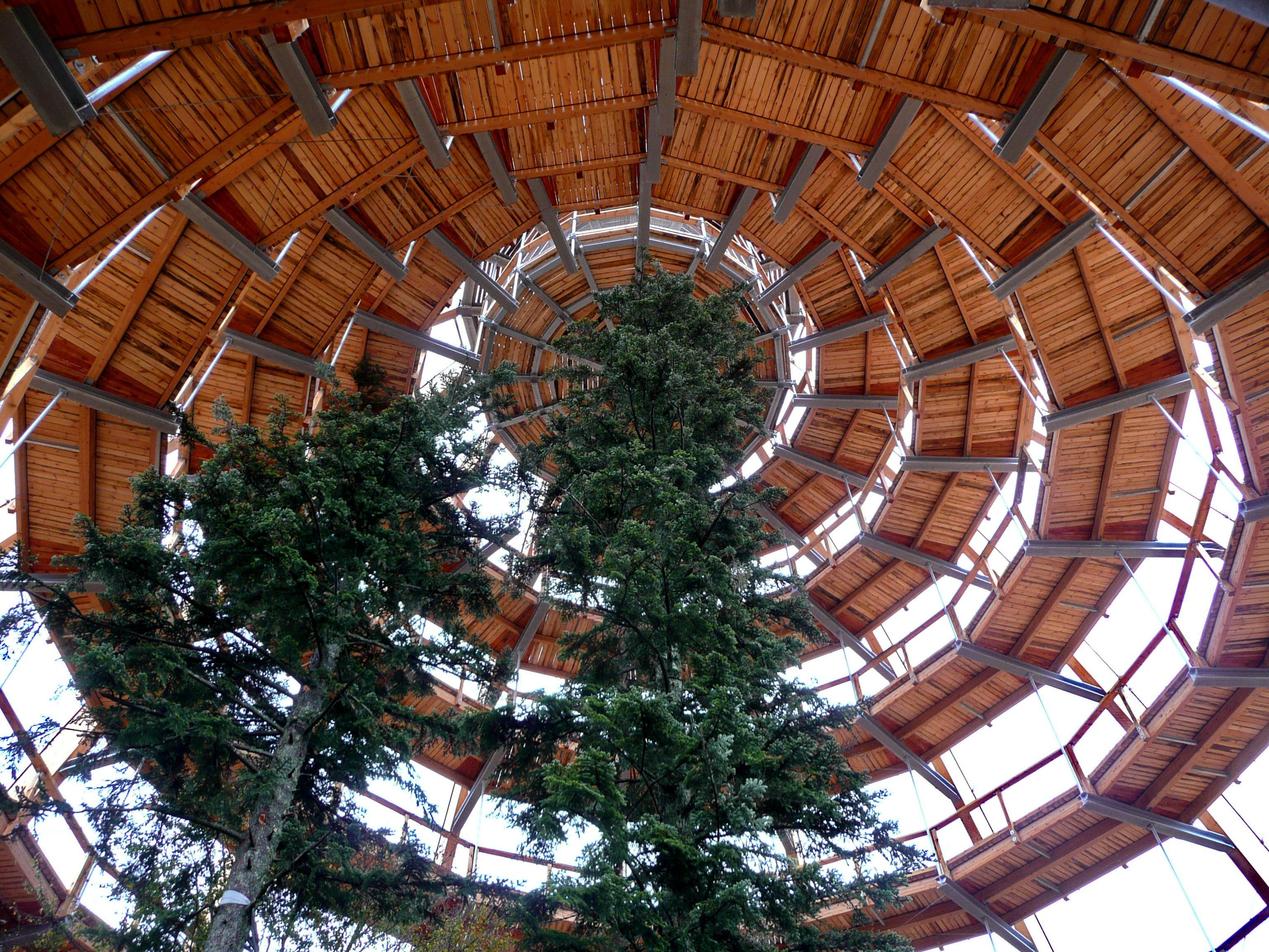 Im Turm des Baumwipfelpfades
