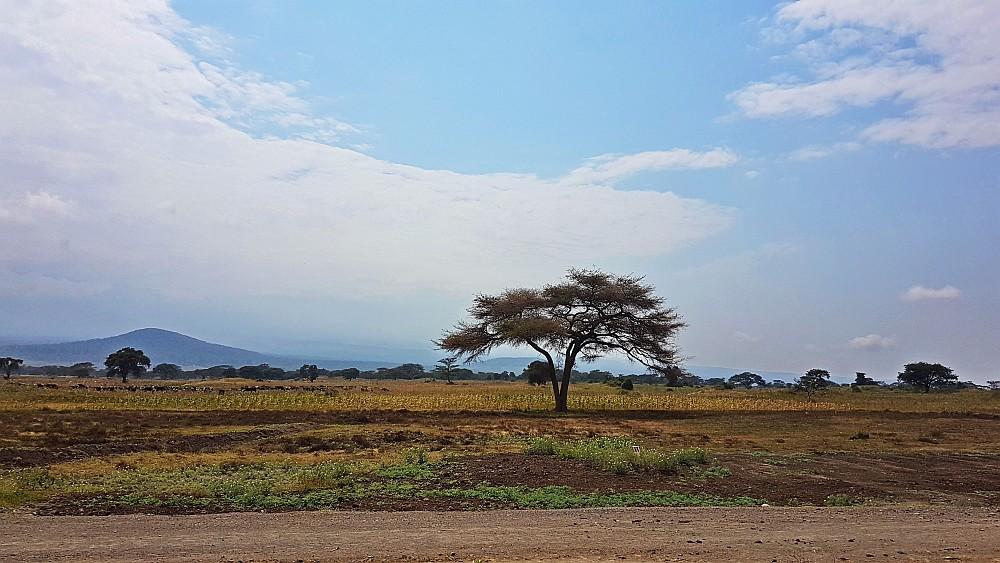 """Ein erster """"typisch Afrika""""-Eindruck"""