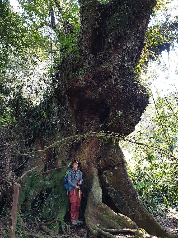 Bin ich so klein oder ist der Baum so groß?